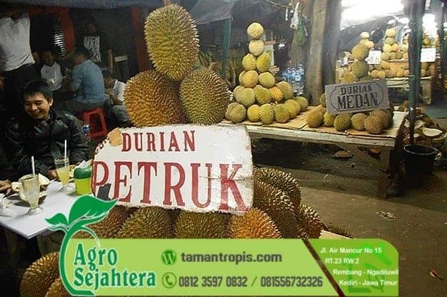 Jual Bibit Durian Petruk Jepara